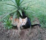 Petit chat male jaune