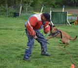Dresseur professionnels toutes les races de chien