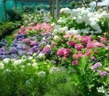 Aménagement jardin japonais maroc