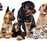 Dresseur de chiens professionnel
