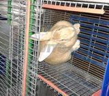 Cage Professionnelle