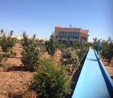 ferme de 6ha région tifelt