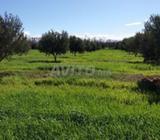 Terrain agricole de 7.8 ha à angad Landbouwgrond