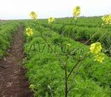 Terrain agricole titré 1 ha sur Benslimane