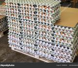 œuf en gros