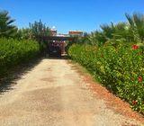 Belle ferme 4 ha sur la route d'essaouira